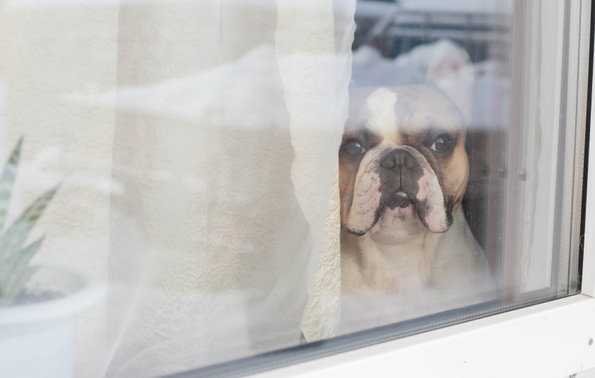 Worried About Leaving Your Dog at Home Alone