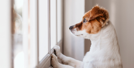 Pets and wild animals are some of the most common culprits for setting off an alarm.